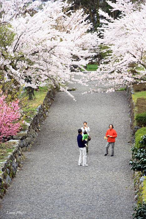 桜を求めて琵琶湖一周ドライブ ④_a0116472_1489100.jpg