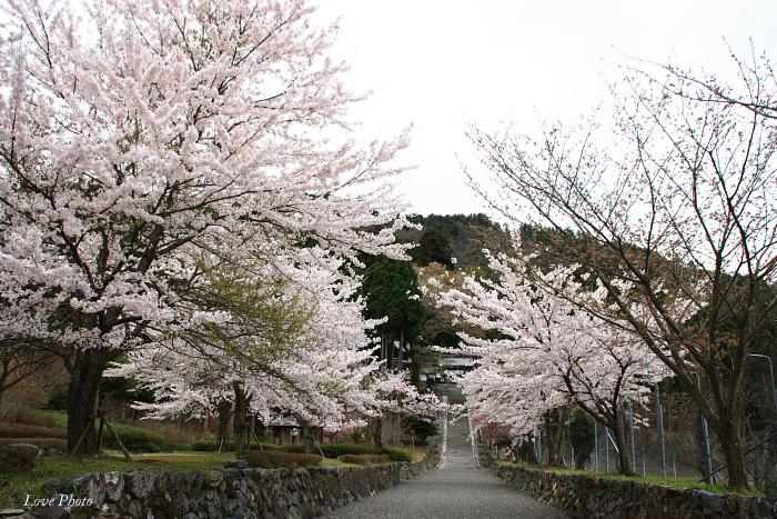 桜を求めて琵琶湖一周ドライブ ④_a0116472_150123.jpg