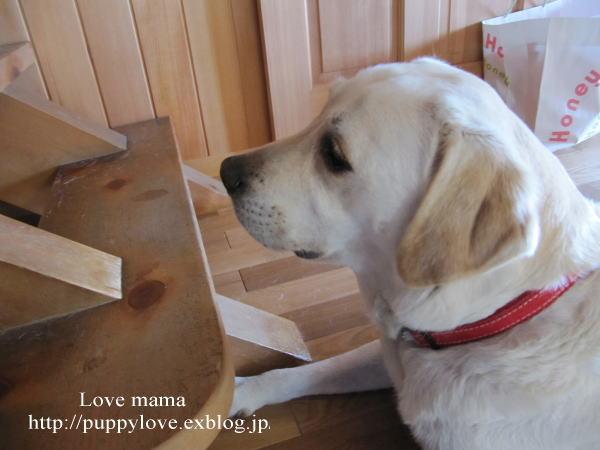 今日は国際盲導犬の日!!_b0136683_14302510.jpg