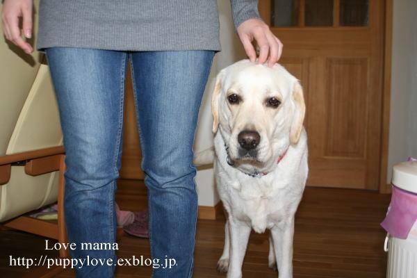 今日は国際盲導犬の日!!_b0136683_14343135.jpg