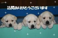 今日は国際盲導犬の日!!_b0136683_1472767.jpg