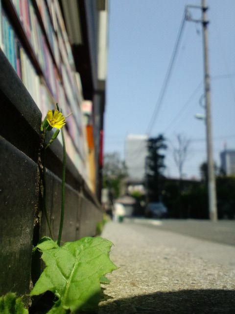 2010/04/28   せと_f0035084_22331166.jpg