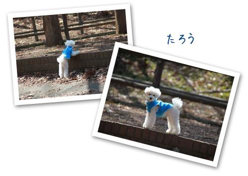 f0127388_1127812.jpg
