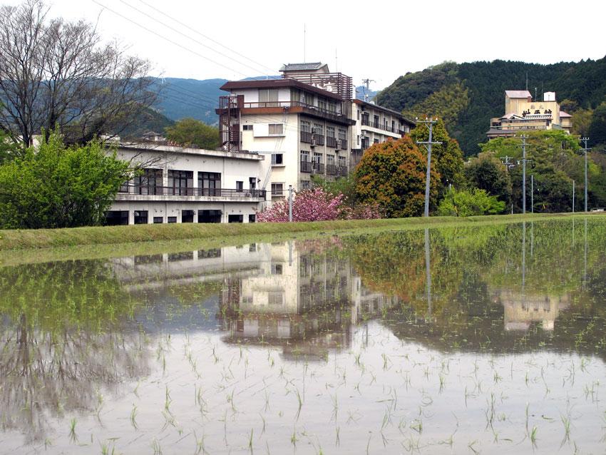 水田に映える_b0145296_70991.jpg