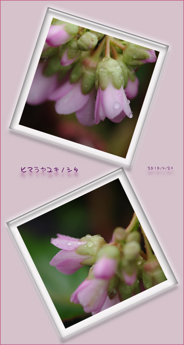 b0019313_17531925.jpg