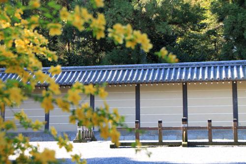 京都御苑 山吹満開_e0048413_2219991.jpg