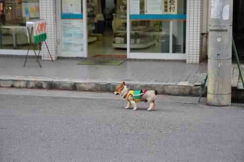 石垣島_a0071514_1803387.jpg