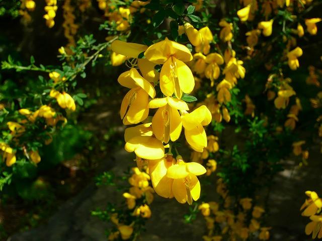 花探し♪_f0223914_211186.jpg