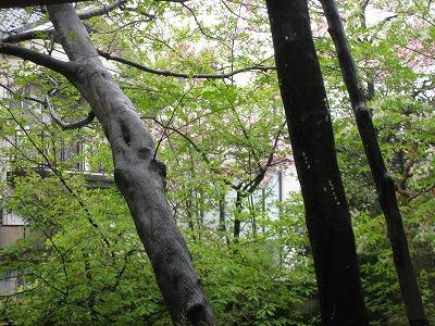 """""""自然""""は近くにあるんです!窓から楽しむスバラシイ借景_e0010418_19703.jpg"""