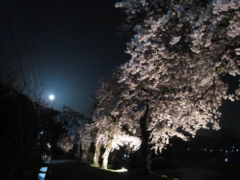 桜情報「大町観光道路の夜桜」_b0140235_2334537.jpg