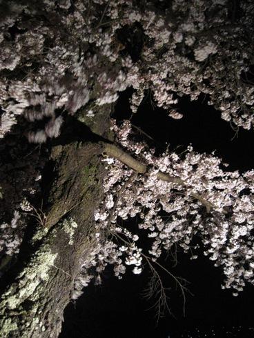 桜情報「大町観光道路の夜桜」_b0140235_2335684.jpg