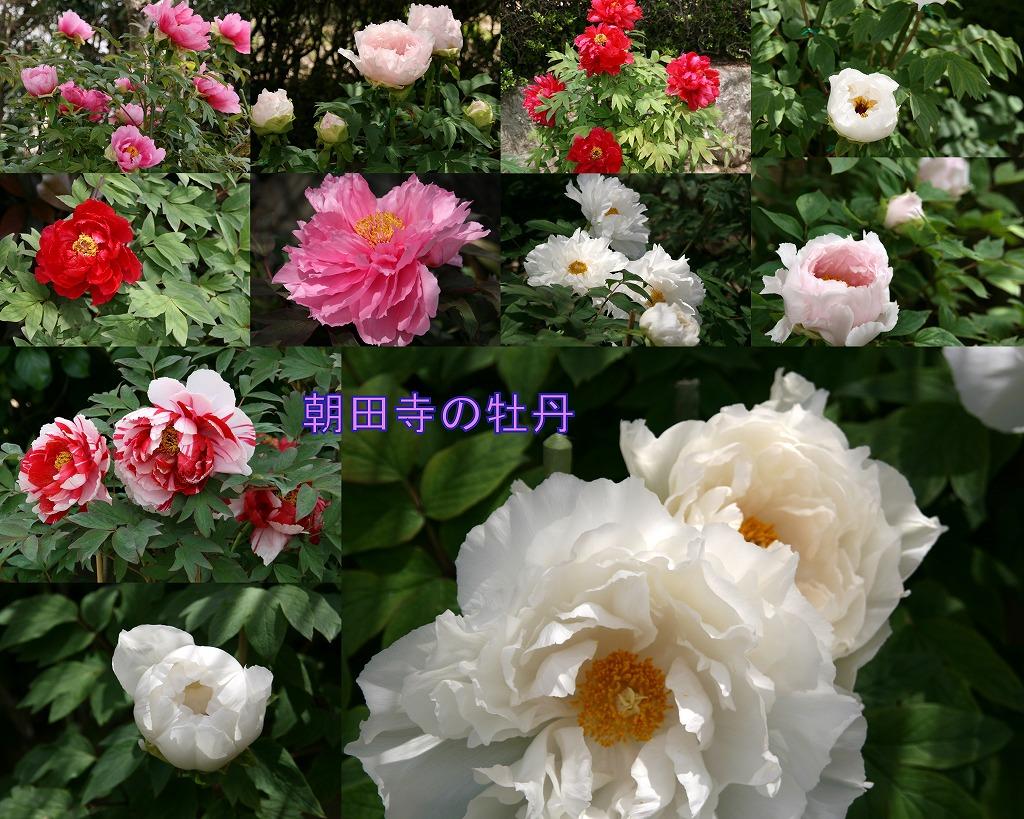 d0052340_1023929.jpg