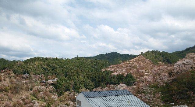 吉野の千本桜  4/11_c0154941_1293230.jpg