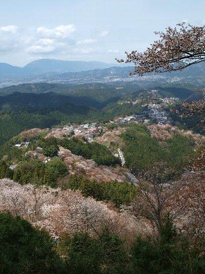 吉野の千本桜  4/11_c0154941_130296.jpg