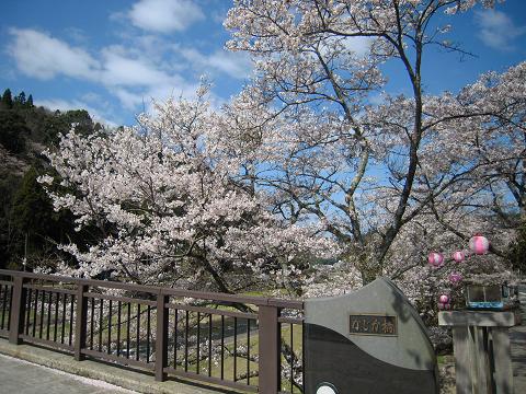 山陰の名湯・三朝温泉 ~西国桜旅⑦_b0050651_102135.jpg