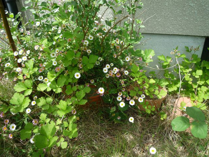 秘密の花園_e0147757_02075.jpg