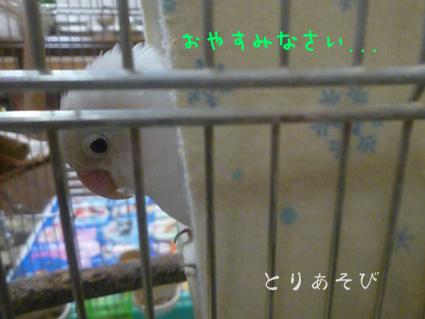 秘密の花園_e0147757_041166.jpg