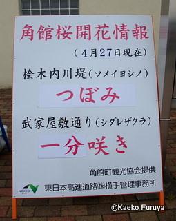 みちのく つぼみ見の旅(;-.-) _a0092659_11115597.jpg