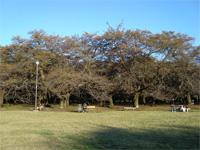 小金井「江戸東京たてもの園」へ行く。 _f0232060_18523619.jpg