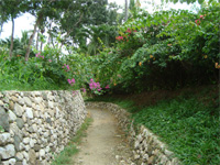 セブ島へ行く。⑥ ~Puchraの自家菜園~_f0232060_2137258.jpg