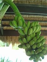 セブ島へ行く。⑥ ~Puchraの自家菜園~_f0232060_21383555.jpg