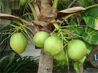 セブ島へ行く。⑥ ~Puchraの自家菜園~_f0232060_21391541.jpg