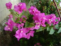 セブ島へ行く。⑥ ~Puchraの自家菜園~_f0232060_21392374.jpg