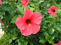 セブ島へ行く。⑥ ~Puchraの自家菜園~_f0232060_21393198.jpg
