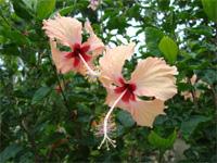 セブ島へ行く。⑥ ~Puchraの自家菜園~_f0232060_21393940.jpg