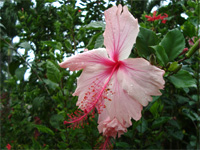 セブ島へ行く。⑥ ~Puchraの自家菜園~_f0232060_21394729.jpg