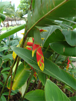 セブ島へ行く。⑥ ~Puchraの自家菜園~_f0232060_21395455.jpg