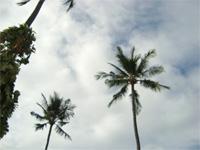 セブ島へ行く。⑥ ~Puchraの自家菜園~_f0232060_2140357.jpg