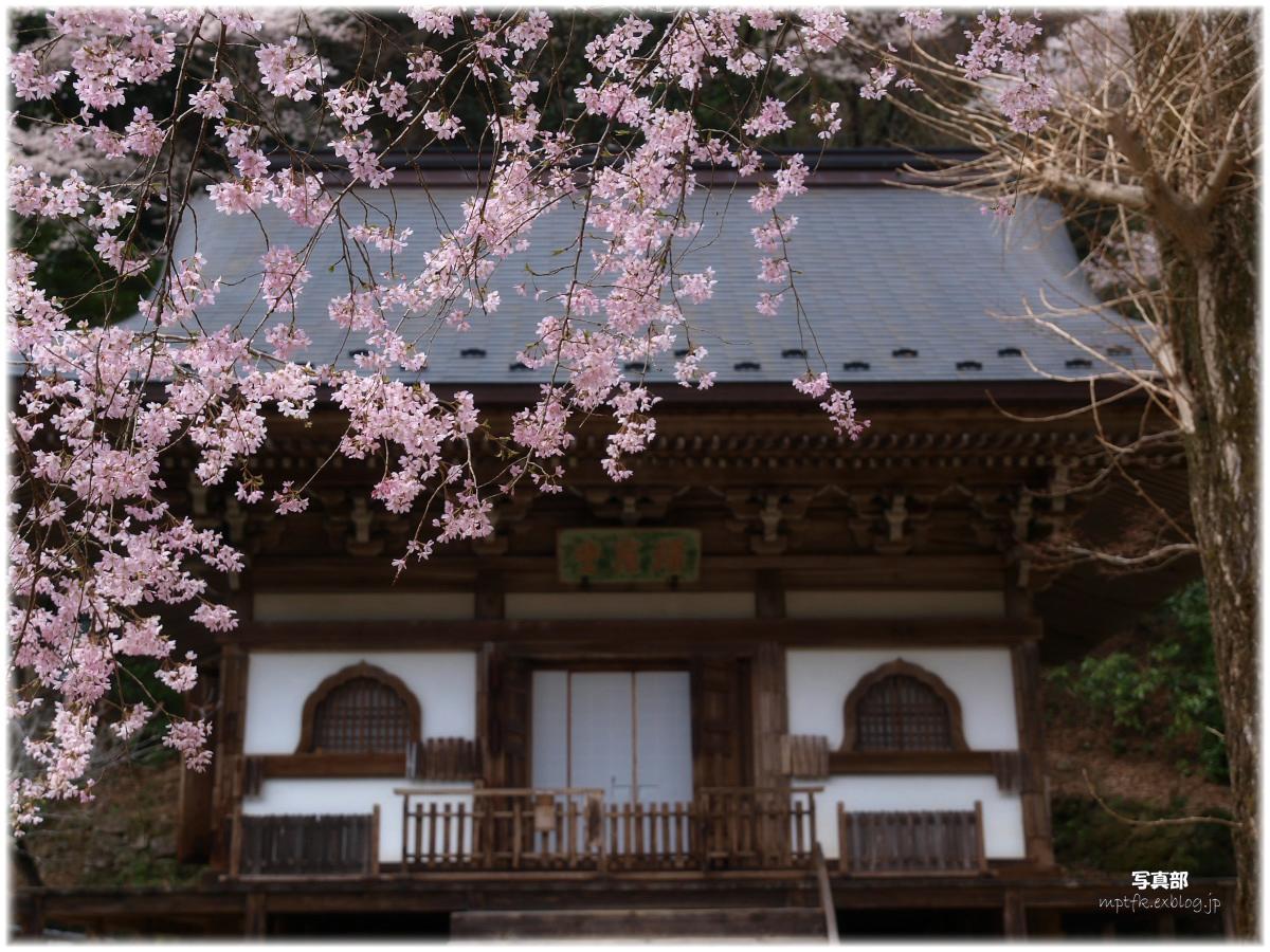 奈良 室生寺 桜_f0021869_321377.jpg