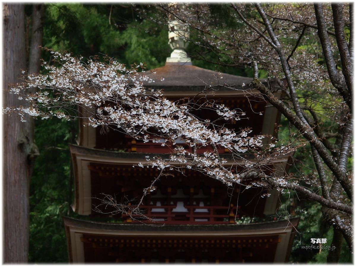 奈良 室生寺 桜_f0021869_3238100.jpg