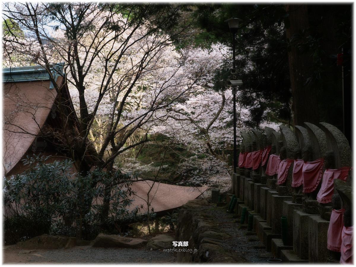 奈良 室生寺 桜_f0021869_3251517.jpg