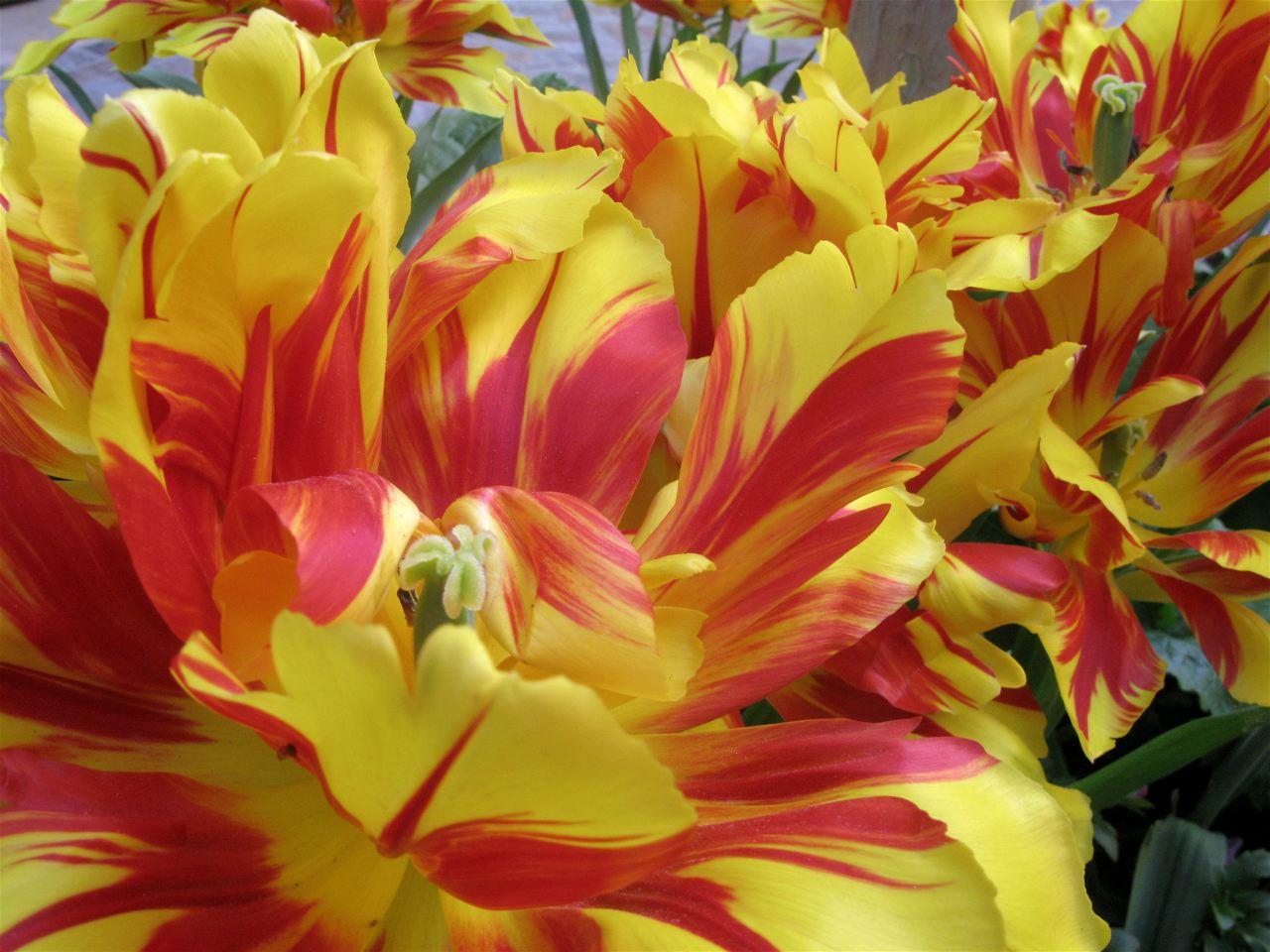 赤や黄色や白やピンク〜♪♪〜(パリ−フランス)_f0119071_1123929.jpg