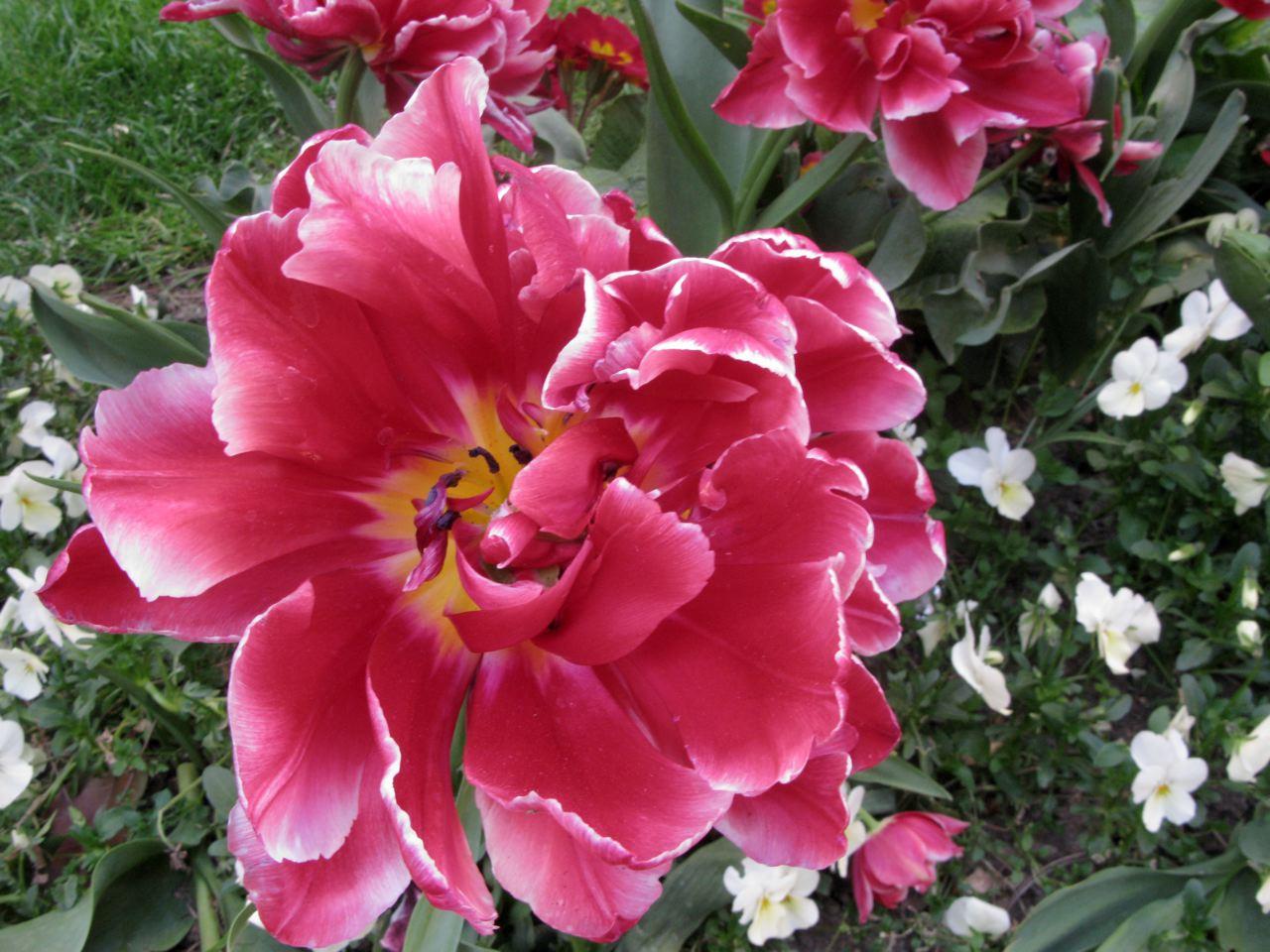 赤や黄色や白やピンク〜♪♪〜(パリ−フランス)_f0119071_19735.jpg