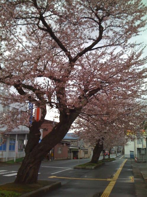 よしもと初の演歌歌手「水木ケイ」を大仙市役所玄関でパチリ_d0084478_2111377.jpg