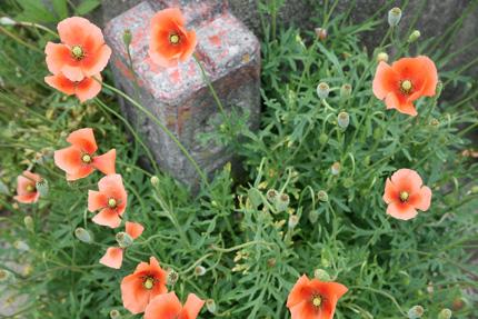 f0130980_2012317.jpg