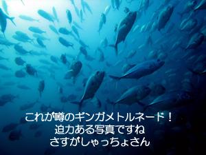 f0144385_22423195.jpg