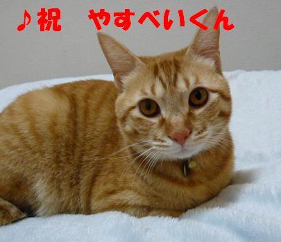第6回ちばわん「ねこ親会in品川(西大井)」開催のご報告_d0027698_10322129.jpg