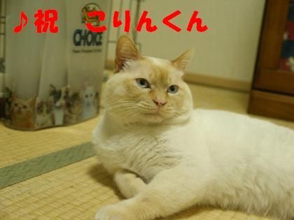 第6回ちばわん「ねこ親会in品川(西大井)」開催のご報告_d0027698_10323957.jpg