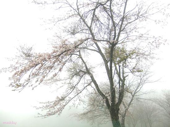 a0115202_20113976.jpg