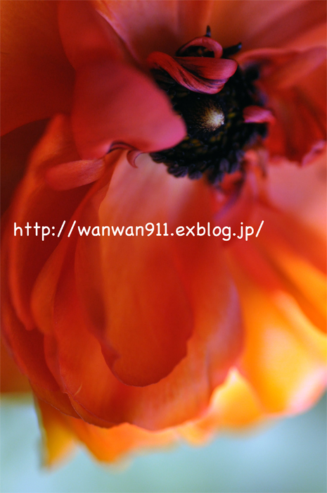 a0112204_9211538.jpg