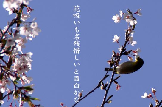 花吸い_e0099713_2084537.jpg