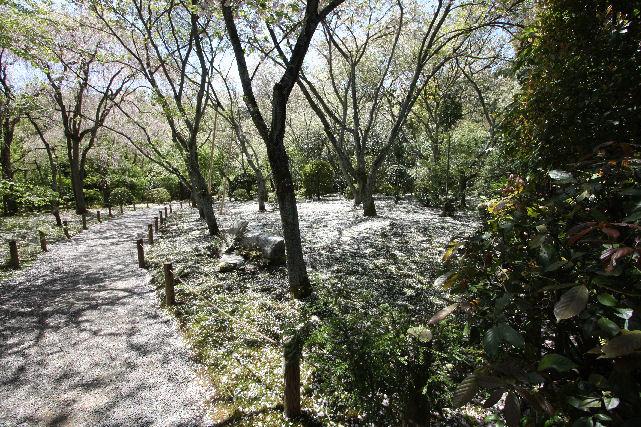 京都 名庭巡り_c0210533_19212585.jpg