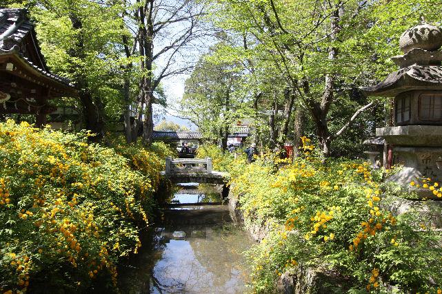 京都 名庭巡り_c0210533_1946285.jpg