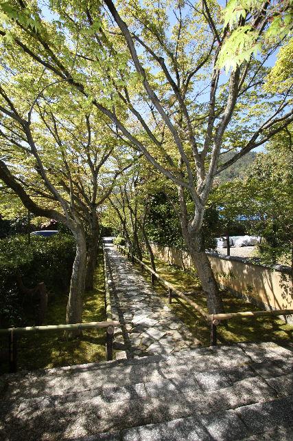 京都 名庭巡り_c0210533_19593732.jpg