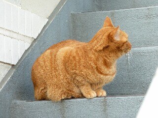鳩パトロール猫 しぇる編。_a0143140_21353878.jpg