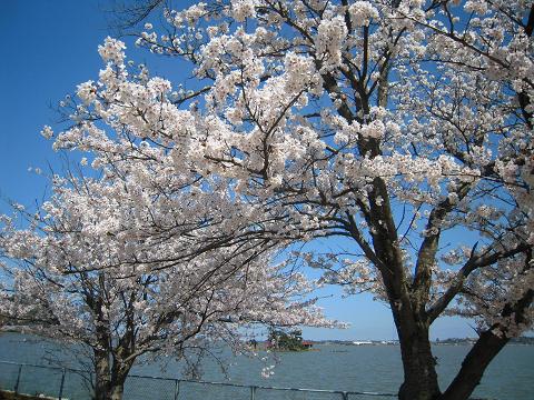 旅の終わりは鳥取大砂丘 ~西国桜旅⑧_b0050651_1417014.jpg